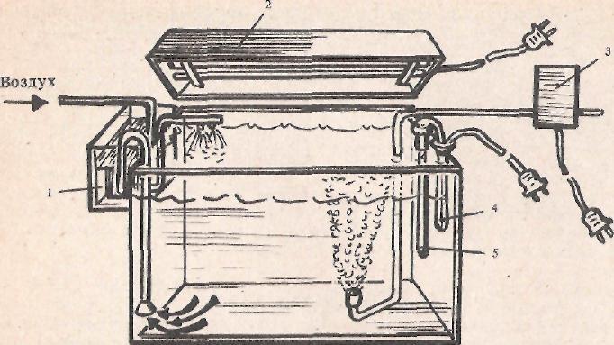 Аквариум с необходимым оборудованием: 1 — наружный фильтр; 2 — светильник; 3 — компрессор; 4 — автомат, включающий обогрев; 5 — нагреватель